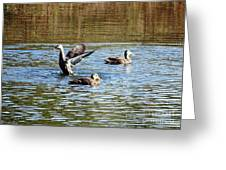 Ducks On Colorful Pond Greeting Card