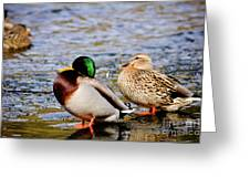 Ducks On Ice Greeting Card
