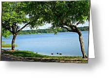 Ducks On Lake Edge Greeting Card