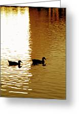Ducks On Pond 2 Greeting Card