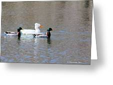 Ducks On Pond Greeting Card