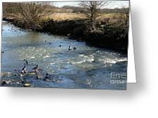 Ducks On The River In Early Spring Greeting Card