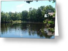 Ducks On The River Greeting Card