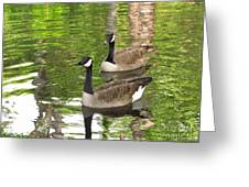Ducks Out For A Swim Greeting Card