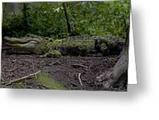 Duckweed Camouflage Greeting Card