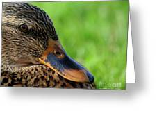 Ducky Up Close And Personal Greeting Card