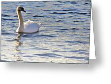 Duddingston Swan 1 Greeting Card