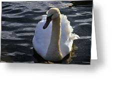 Duddingston Swan 13 Greeting Card