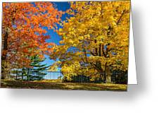 Dueling Maples Greeting Card