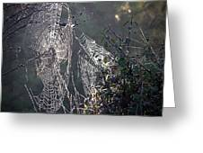 Dueling Webs Greeting Card
