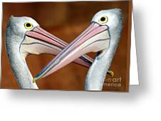 Duelling Pelicans Greeting Card