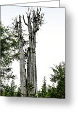 Duncan Memorial Big Cedar Tree - Olympic National Park Wa Greeting Card by Christine Till