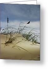 Dune And Beach Grass Greeting Card
