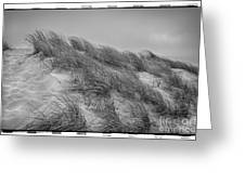 Dune Grass, Florence Greeting Card
