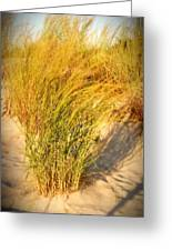 Dune Grass II  - Jersey Shore Greeting Card by Angie Tirado