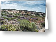 Dune Plants As Erica And Beautiful Sky Greeting Card