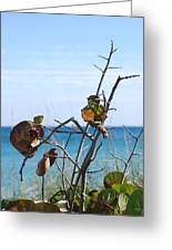 Dune Plants Greeting Card