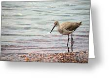 Dunlin And The Green Sea Greeting Card