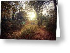 Dunmore Wood - Autumnal Morning Greeting Card
