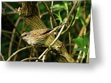 Dunnock In A Hedgerow Greeting Card