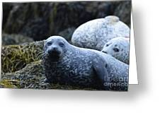 Dunvegan Loch With A Group Of Harbor Seals Greeting Card