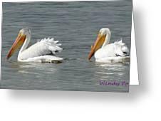 Duo Pelicans Greeting Card