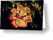 Durango Outback Mix 02 - Photopower 3200 Greeting Card