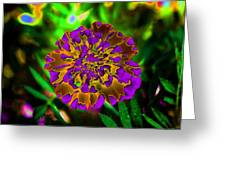 Durango Outback Mix 05 - Photopower 3203 Greeting Card
