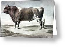 Durham Bull, 1856 Greeting Card