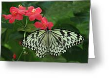 Durham Butterfly #5 Greeting Card