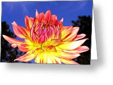 Dusk And A Dahlia Greeting Card