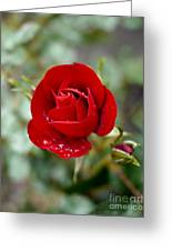 Dusky Red Greeting Card