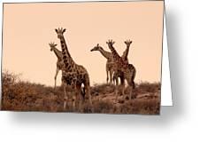 Dusty Giraffes Greeting Card
