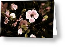 Dusty Pink Greeting Card