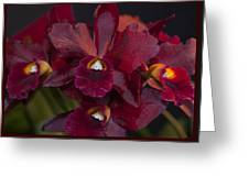 Dusty Red Orchid Greeting Card