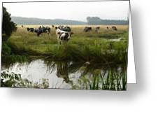 Dutch Cows Greeting Card