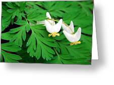 Dutchman's Breeches Greeting Card