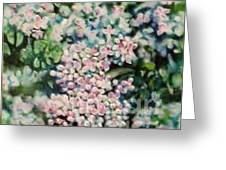 Dwarf Korean Lilac Greeting Card