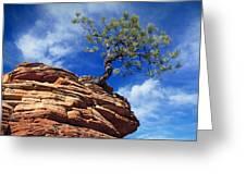 Dwarf Pine And Sandstone Zion Utah Greeting Card