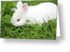 Dwarf White Bunny Spring Scene Greeting Card