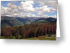 Dying Evergreens Greeting Card