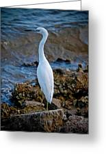 Eager Egret Greeting Card
