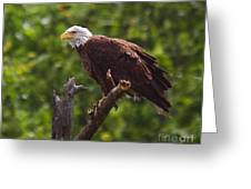 Eagle-2 Greeting Card