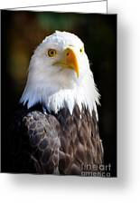 Eagle 23 Greeting Card