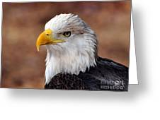 Eagle 25 Greeting Card