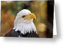 Eagle 9 Greeting Card