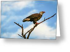 Eagle And Blue Sky Greeting Card