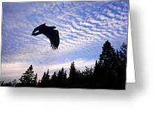 Eagle At Dawn Greeting Card