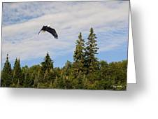 Eagle At Scott Brook Greeting Card