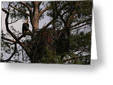 Eagle At The Nest Greeting Card